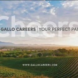 Gallo Careers