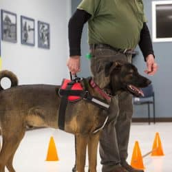veteran standing with service dog on a leash in a class